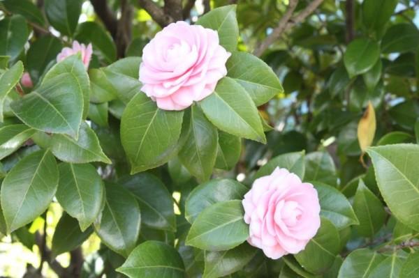 花咲の花便り
