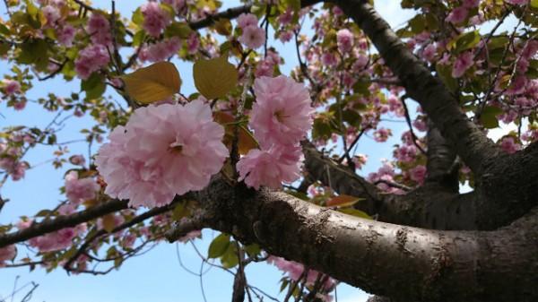 花咲の花便り②