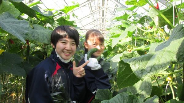 きゅうり収穫体験 食育実践科1年生
