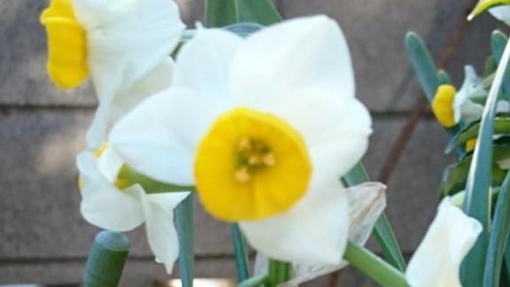 花咲の花便り⑧