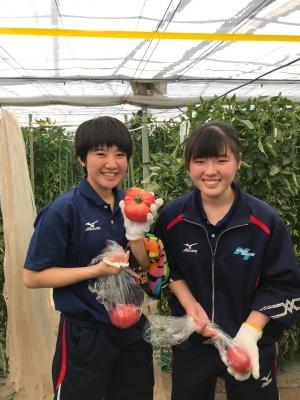 食育実践科2学年 トマト収穫体験