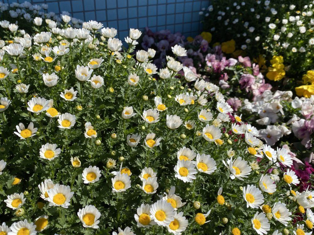 花咲万華鏡⑤