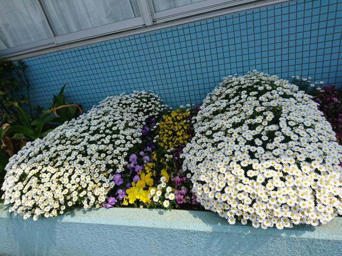 花咲万華鏡3